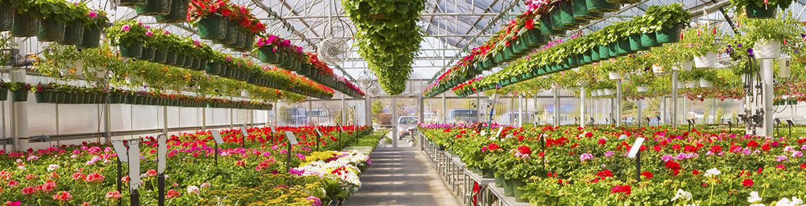Retail and Display Greenhouses