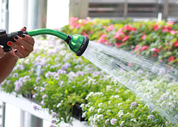 Hand Watering & Hoses