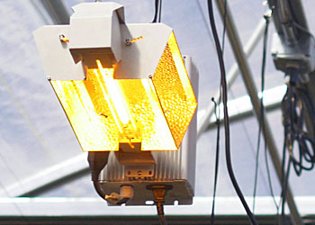 High-Intensity Grow Lights