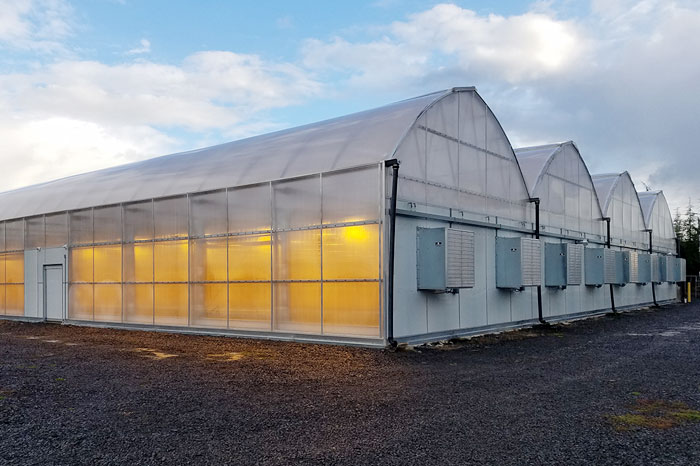 Gothic Light Deprivation Series Greenhouse