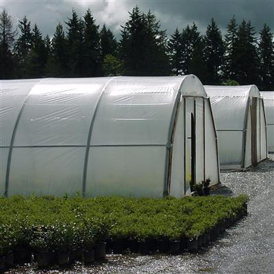 Standard Clear Greenhouse Film, 6mil