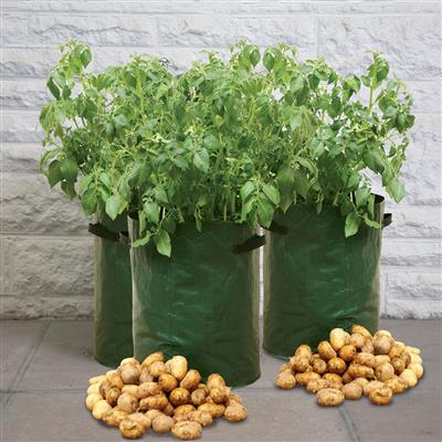Vegetable Patio Planter 3 Pack Greenhouse Megastore